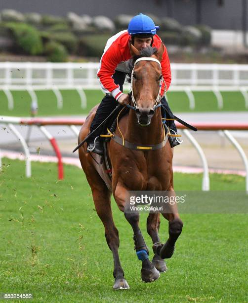 Ryan Maloney riding Ability during a trackwork Session at Moonee Valley Racecourse on September 25 2017 in Melbourne Australia