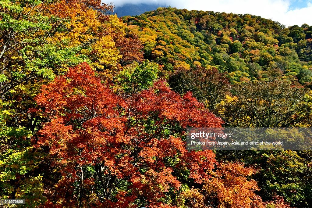Ryuzu (Dragon's Head) Falls in Autumn, Nikko, Japan : Stock Photo