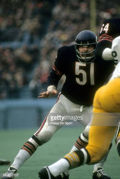 CHICAGO IL CIRCA 1970's Linebacker Dick Butkus of the Chicago Bears in action against the Green Bay Packers circa early 1970's during an NFL football...