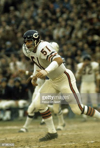 BALTIMORE MD CIRCA 1970's Linebacker Dick Butkus of the Chicago Bears in action against the Baltimore Colts circa 1970's during an NFL football game...