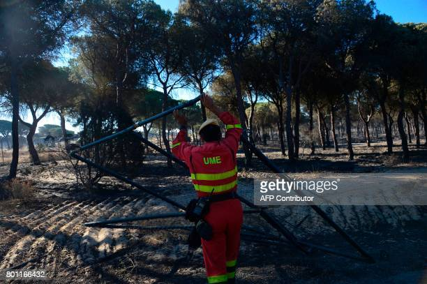 's member removes a burnt fence next to a charred forest after a wildfire in Mazagon near the Donana National Park on June 26 2017 More than 1500...
