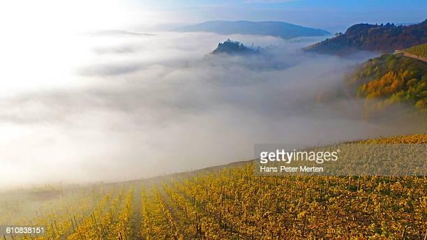 Saarburg, vineyards in autumn and castle ruin
