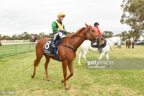 Sacambaya ridden by Liam Riordan returns after the Save the Date BM64 Handicap at Warracknabeal Racecourse on September 02 2017 in Warracknabeal...
