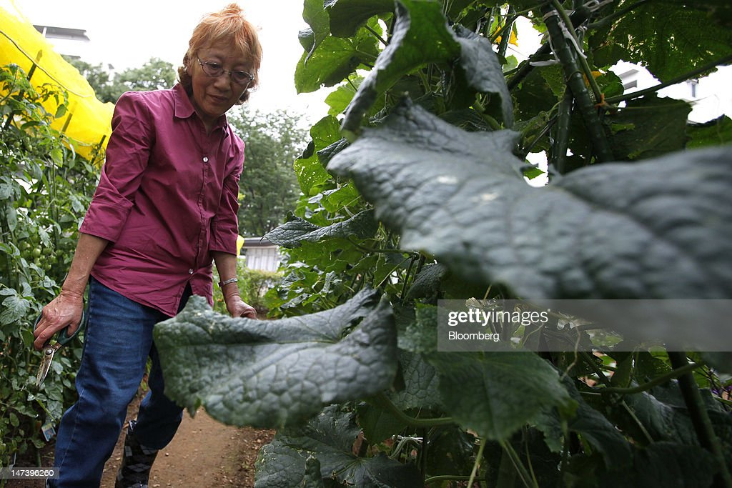 Sachiko Sasaki, 76, works in a vegetable garden at Kohitsuji-en Care Home in Kashiwa City, Chiba Prefecture, Japan, on Thursday, June 28, 2012. Japan ages faster than any other developed society, with 23 percent of the population 65 or older, according to government figures. Photographer: Kiyoshi Ota/Bloomberg via Getty Images