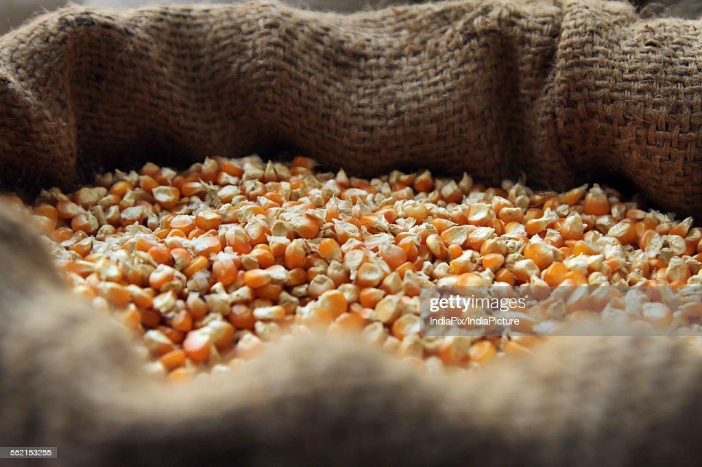 Sack full of corn kernel for sale