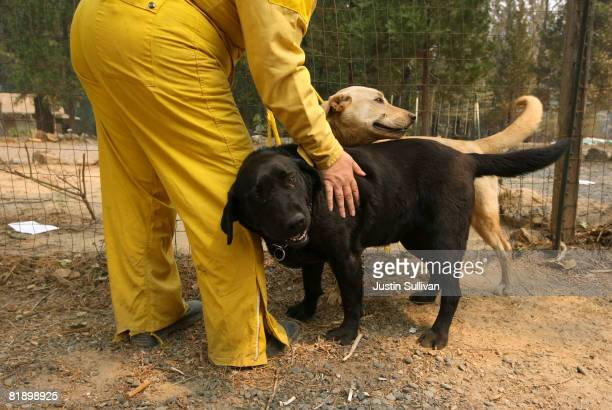 Sacramento County Animal Control officer pets two abandoned dogs that they recovered from a yard July 10 2008 in Concow California Firefighters...
