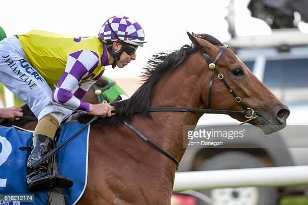 Sacred Elixir ridden by Damian Lane wins LUCRF Super Vase at Moonee Valley Racecourse on October 22 2016 in Moonee Ponds Australia