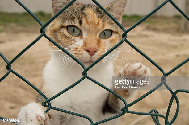 Sad cat behind a fence