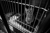 A picture of a sad cat in a cage at the pound. Shot in black and white.