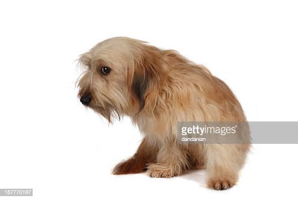 Traurig Hund