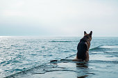 Sad dog sits by the sea and look away