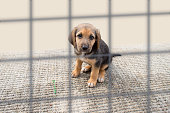 sad dog in a cage at the pound