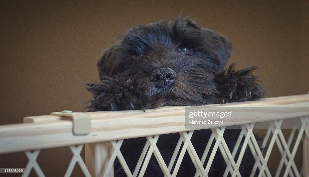 Sad Puppy : Stock Photo