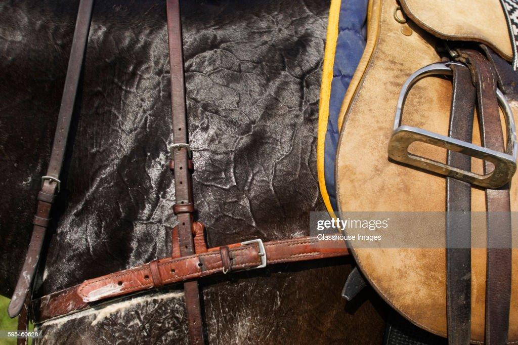 Saddle on Horse, Close-Up