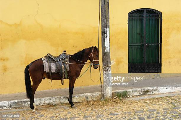 Saddled Horse Tied to Pole