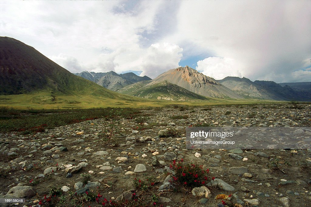 Sadelrochit Mts with Indian Paintbrush along the Sadelrochit River ANWR 1990
