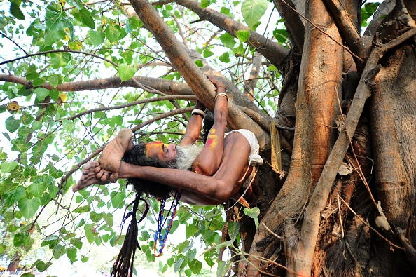 A sadhu performing yoga in a tree on the occasion of International Yoga Day