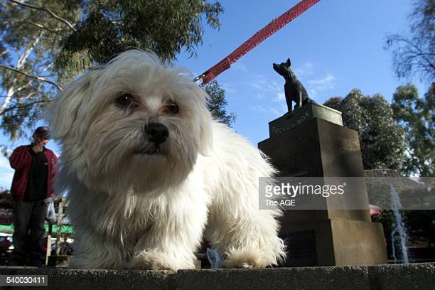 Sadie the dog measures up at The Dog on the Tuckerbox statue in Gundagai in the Southern Highlands of New South Wales 22 July 2001 THE AGE Picture by...