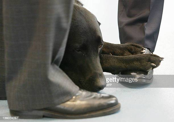 Sadie the Home Secretary's guide dog rests her paws on the shoes of the Prime Minister Tony Blair as he and David Blunkett visit the asylum screening...