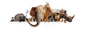 Row of African safari animals hanging their paws over a white banner. Image sized to fit a popular social media timeline photo placeholder