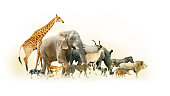 Common African Safari animals walking together with dusty background