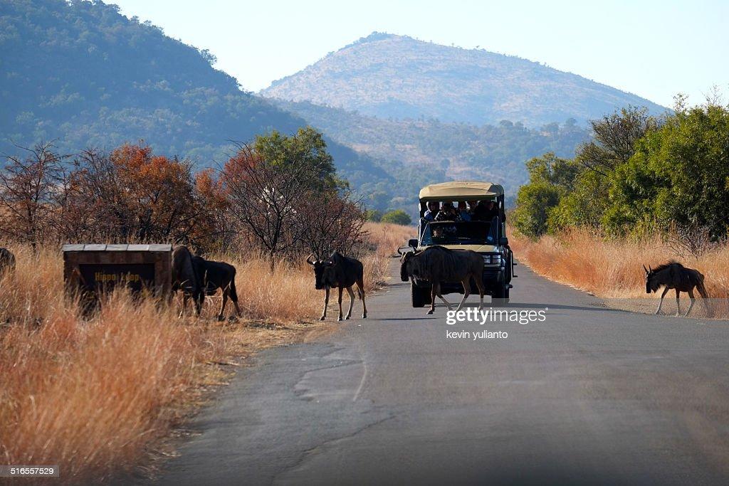 Safari at Pilanesberg National Park
