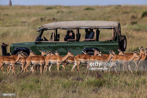 Safari car with herd of Impalas