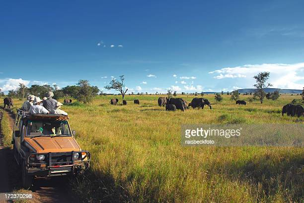 Safari Goers Watching Elephants on the Serengeti Plain, Tanzania