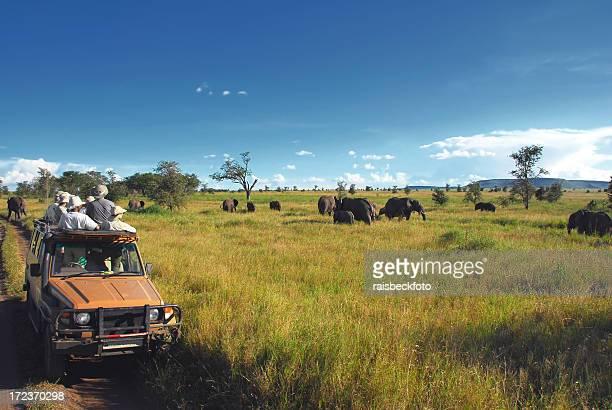 Safari spettatori guardare gli elefanti nella pianura del Serengeti, Tanzania