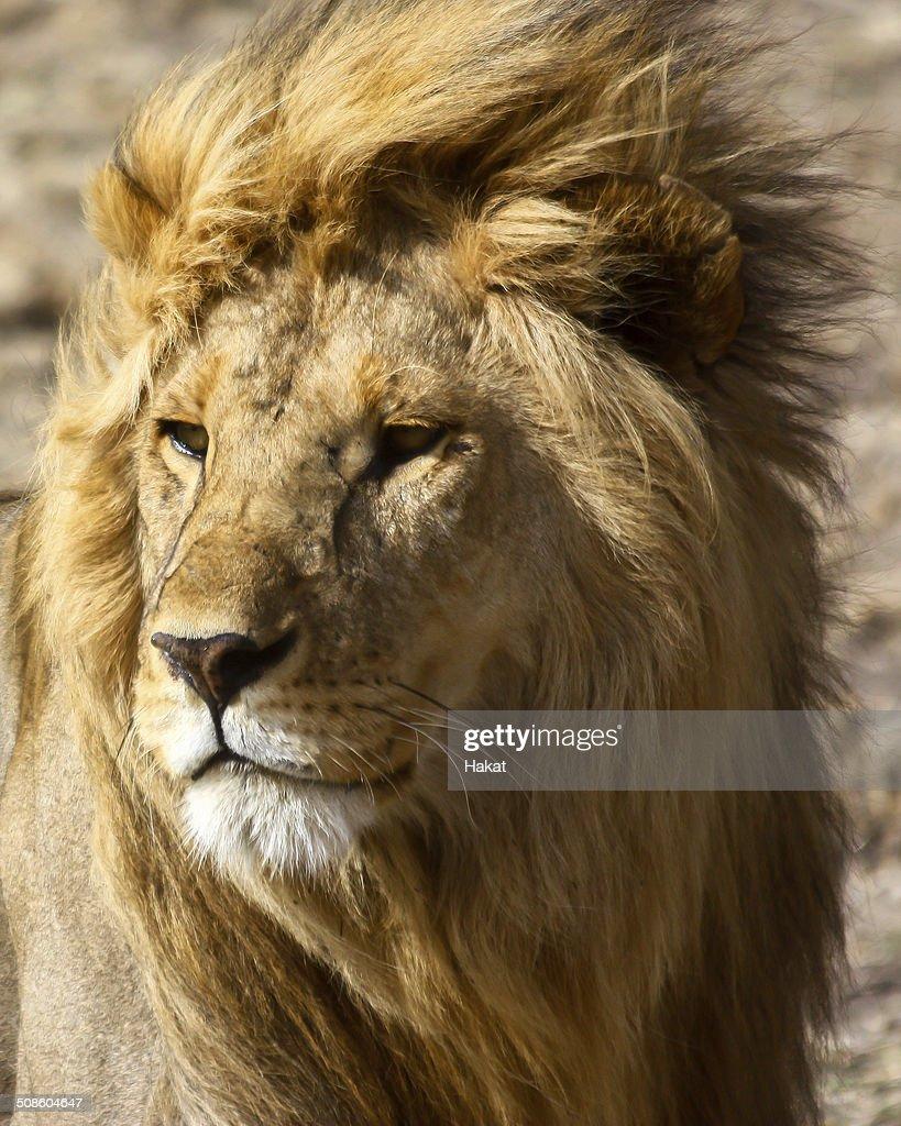 Safari en África. : Foto de stock