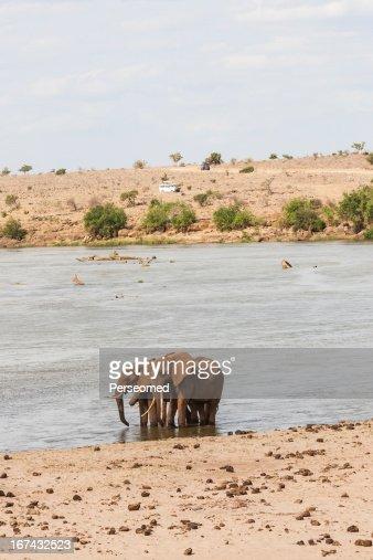Safari in Kenya : Foto de stock