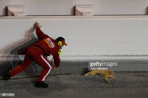 A safety worker chases after a cat on the track prior to the start of the Budweiser Shootout at Daytona International Speedway on February 6 2010 in...