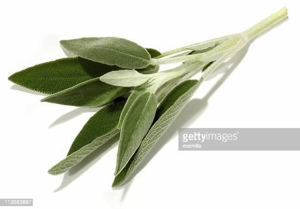 Salbei-Schnitt auf Weiß