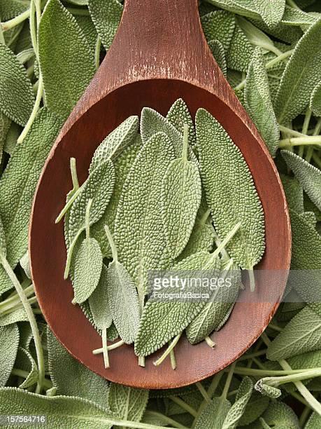 Sage Blätter