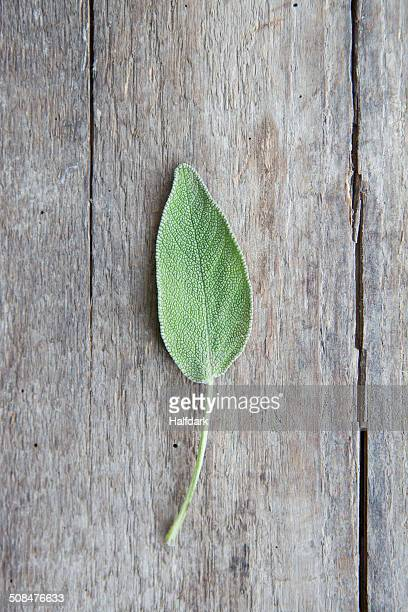 Sage on wooden table