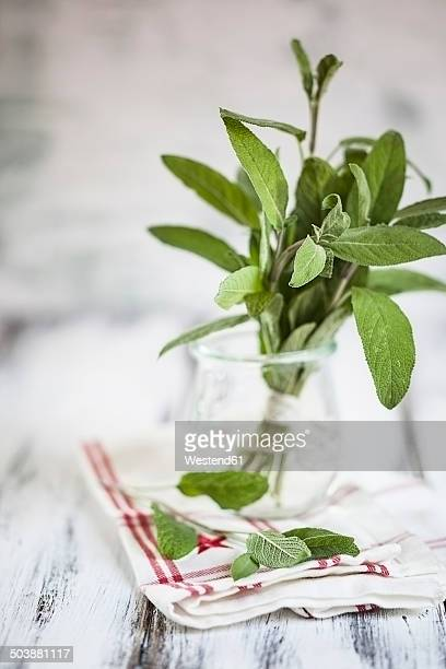 Sage, Salvia officinalis, in a glass