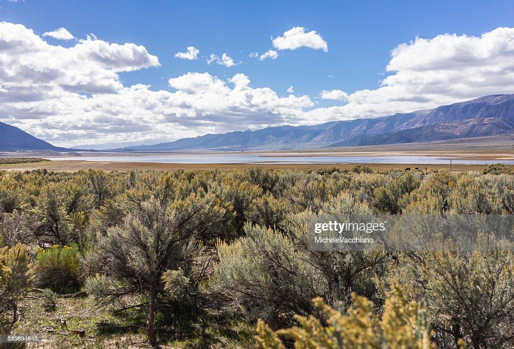 Sagebrush along the US Highway 50 near Scipio Lake, Utah : Stock Photo