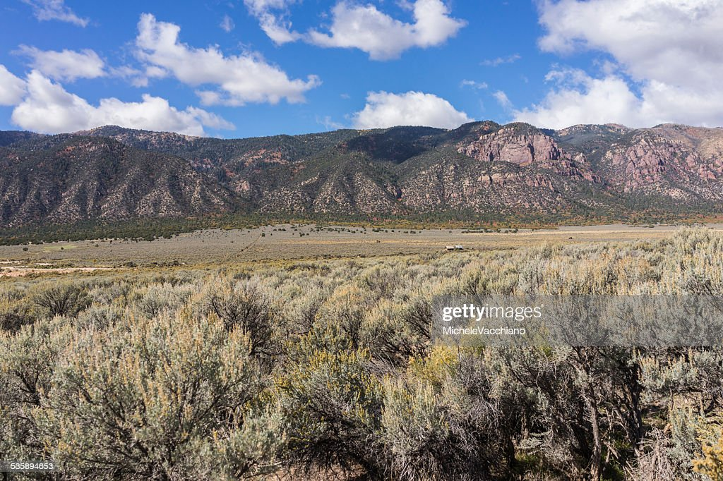Sagebrush along the US Highway 50 near Scipio Lake, Utah : Stockfoto