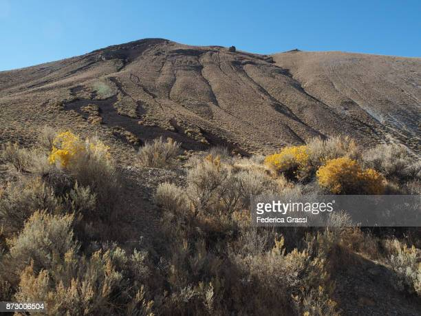 Sagebrush In Bloom At Black Rock Desert