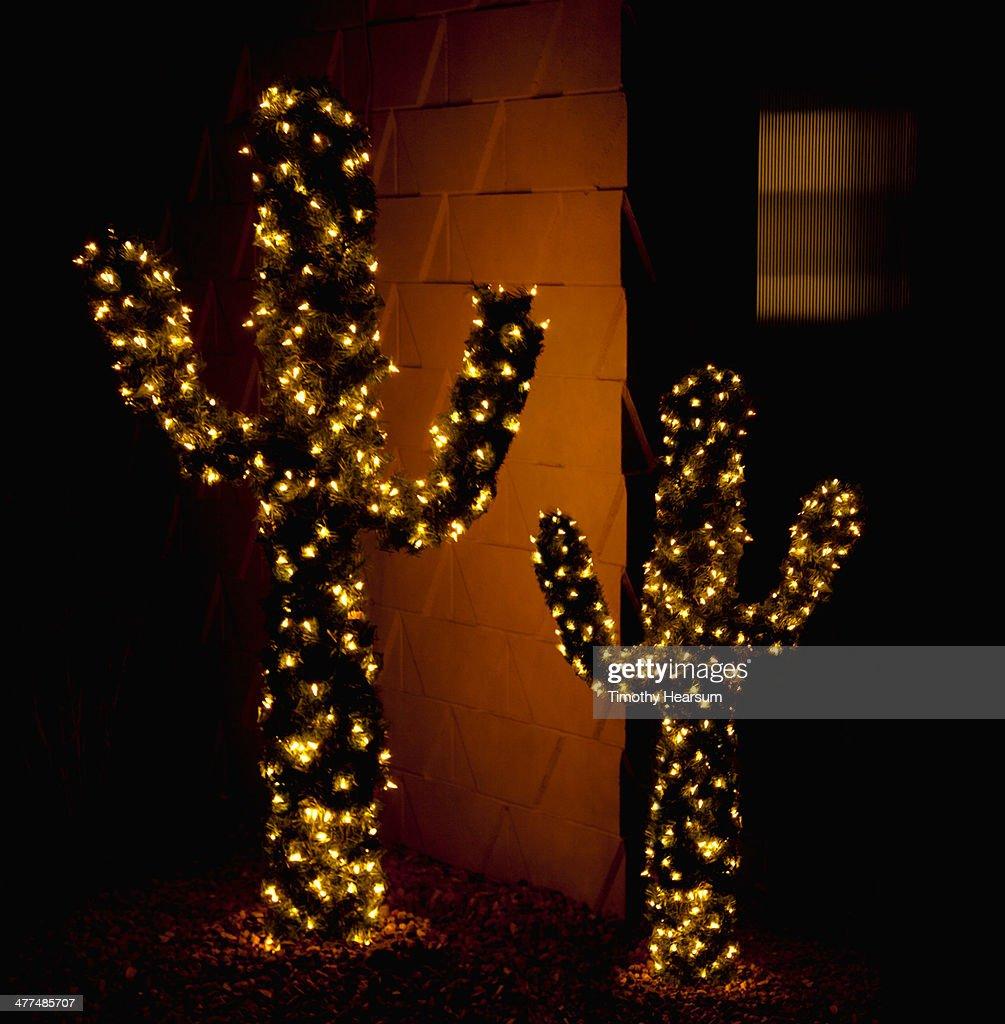 Saguaro cacti with holiday lights