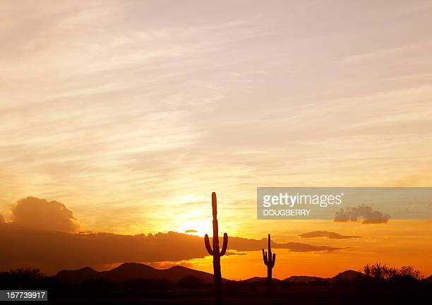 Saguaro Cactus at sunset