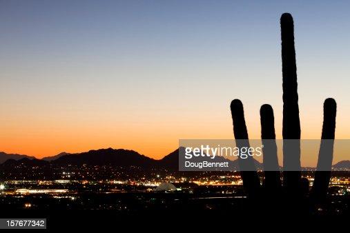 Silhouette de Saguaro sur les lumières de la ville