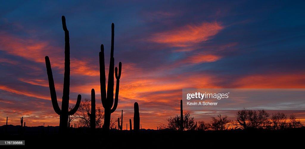 Saguaro Sunset, Saguaro National Park West, Tucson