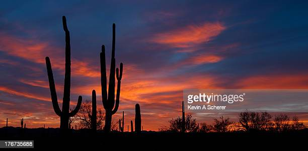 Saguaro Sunset, Saguaro National Park West, Tucson