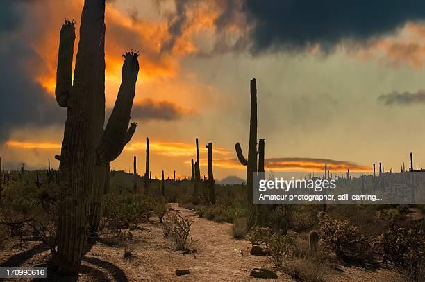 Saguaro Trail