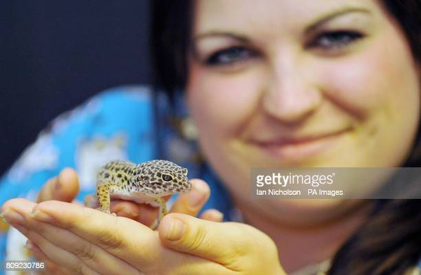 Sahara the leopard Gecko who has turned up safe and well after hitching a 100mile ride inside an envelope following an internet shopping mixup