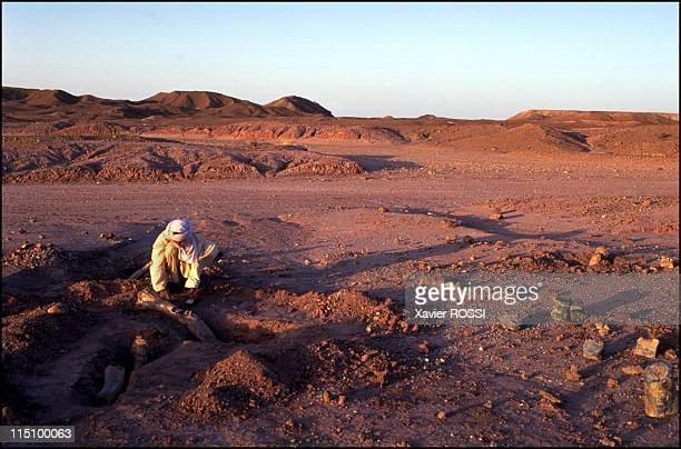 Sahara The valley of dinosaurs in Niamey Niger in December 2000 A Tuareg excavating on a dinosaur deposit site