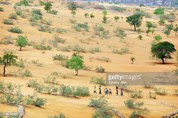 Sahel desert under the Bandiagara Cliffs, Mali