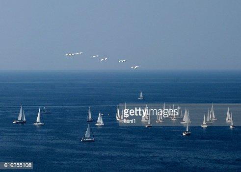 Sailboats and seagulls : Foto de stock