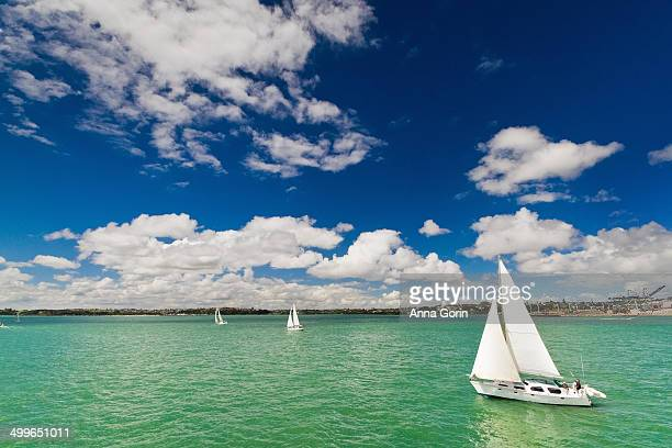 Sailboats on Auckland Harbour on summer afternoon